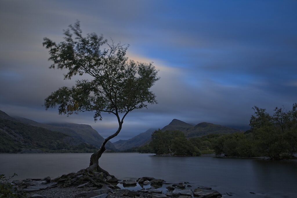 The Lone Tree - Llanberis
